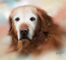 Golden Retriever by Patricia Lintner