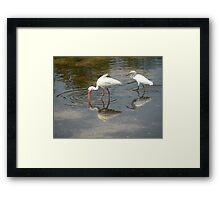 Reflected Birds Framed Print