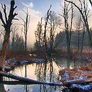 Mountain Bog by Jane Best