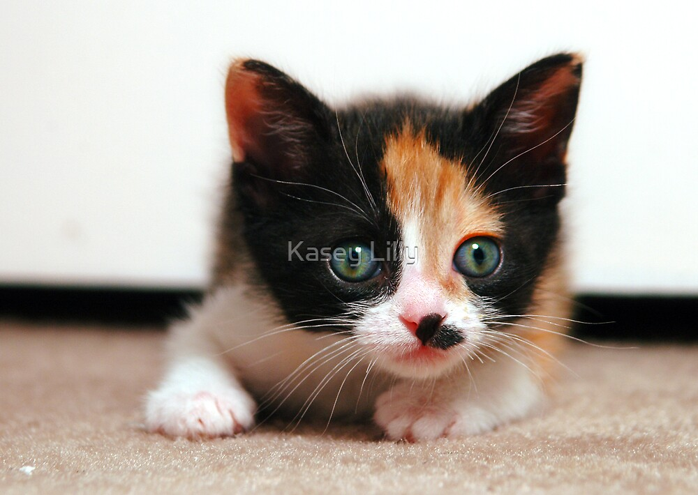 8 Lives Left by Kasey Lilly