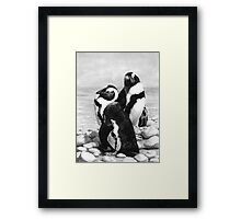 A Pair of Penguins - African Penguins Framed Print