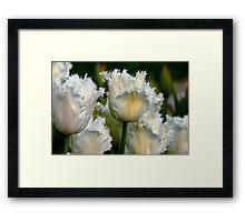 SIMPLY WHITE  PARROT TULIPS Framed Print