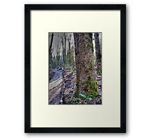 the trail Framed Print