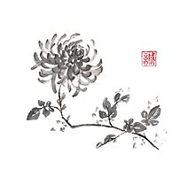Golden dragon Chrysanthemum sumi-e painting Photographic Print