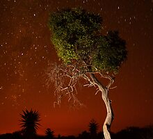 Treepainting at night by Jacques Botha