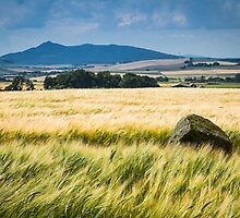 Bennachie, from Bourtie by kt-photography