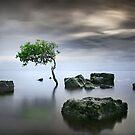 Zen Tree by Ben Ryan