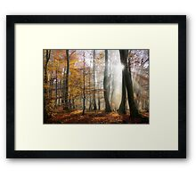 Sun rays in a mystic misty forest Framed Print