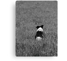 Stalking In Tall Grass Canvas Print