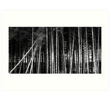 lines B&W Art Print
