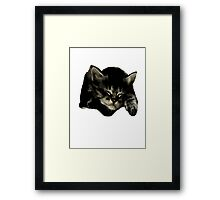Cats and kittens Framed Print