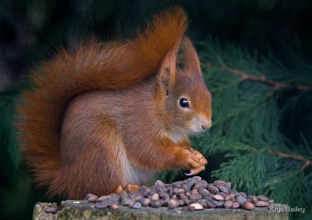 Nut Brunch by Krys Bailey