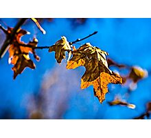Dry oak leaf - Spring is nor far off Photographic Print