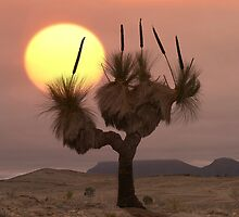 The Grass Tree - Flinders Ranges by Hans Kawitzki