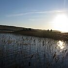 Finlaggan through reeds by Bondbloke