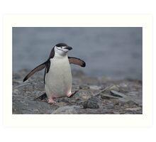 Chinstrap Penguin Art Print