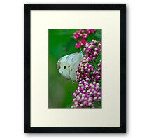 Mating Butterflies Framed Print