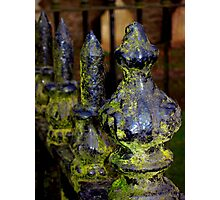 Mossy Spikes Photographic Print