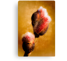 Willow buds - Thrust Of New Life Canvas Print