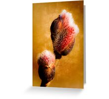 Willow buds - Thrust Of New Life Greeting Card