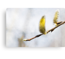 Willow Catkins - Silver World Canvas Print