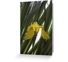 Yellow Flag Iris Greeting Card