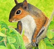 Curious Squirrel Watercolor Pencil Drawing by M Rogers