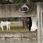 Cow at Farm by marz808