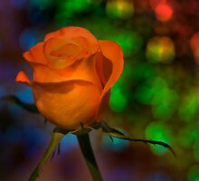 Bokeh Rose by CBell