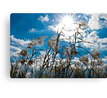 Summertime Sun Canvas Print
