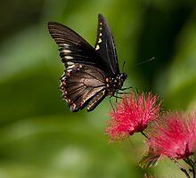 Butterfly at Fairchild Tropical Gardens, Miami by Tomas Abreu