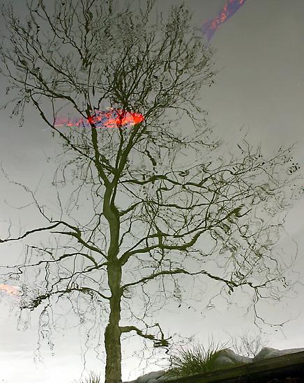 Reflection by RebeccaBlackman