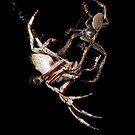 Spider porn by GregB