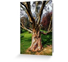 Twisting To Nature's Tune Greeting Card