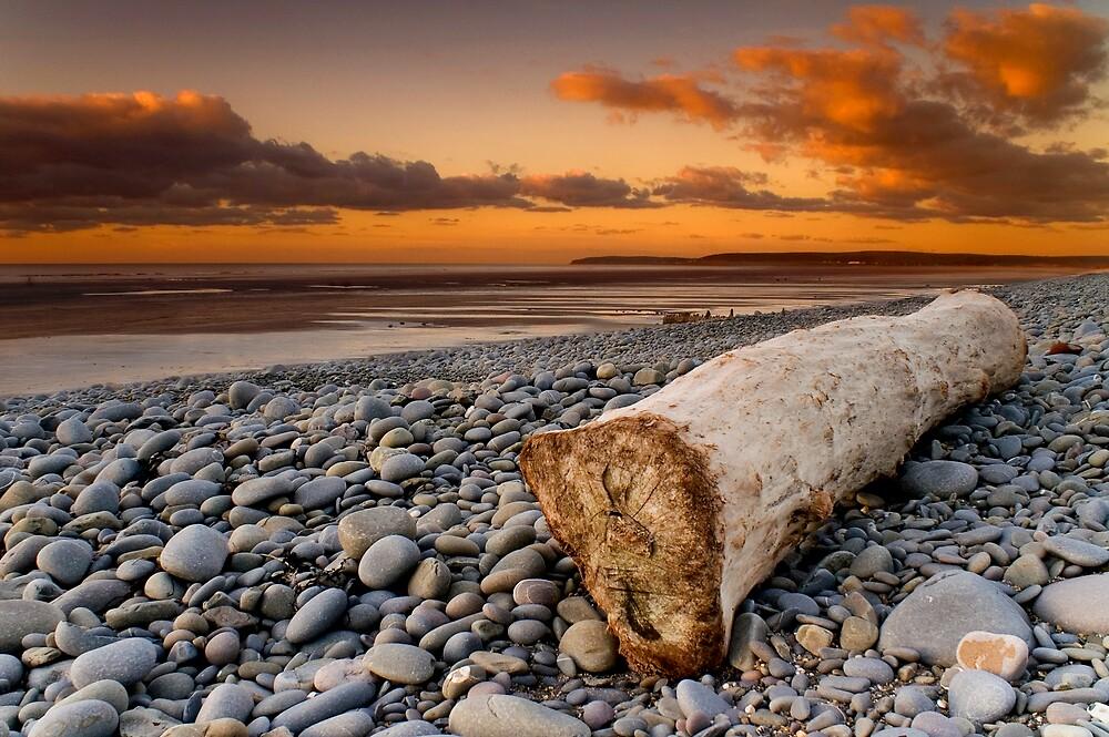 Driftwood by Robert Kendall