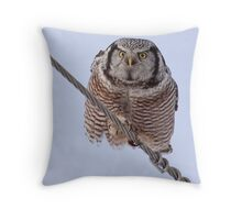 Northern Hawk Owl 2 Throw Pillow