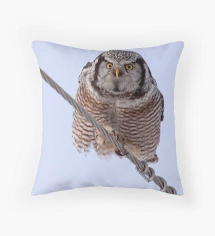 Northern Hawk Owl 2 Throw Pillow