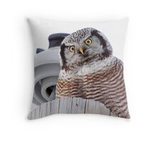 Northern Hawk Owl 3 Throw Pillow