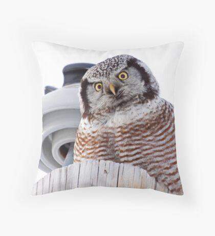 Northern Hawk Owl 3 Throw Pillow