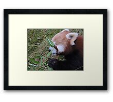Little Bamboo, Little Panda Framed Print