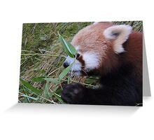 Little Bamboo, Little Panda Greeting Card