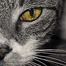 cat's eye by Angel Warda