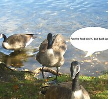 Canada Geese - Funny by jartcreations