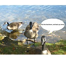 Canada Geese - Funny Photographic Print