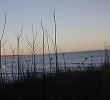 Squibnocket Beach From Afar by Allison  Colarusso