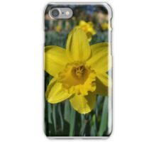 Spring daffodil iPhone Case/Skin