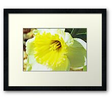 Daffodilly  Framed Print