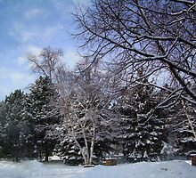 Winter is Still Alive and Well in Toronto... by Larry Llewellyn
