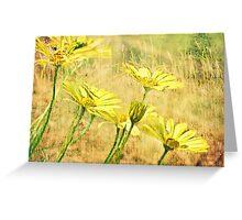 Daylight Daisies Greeting Card