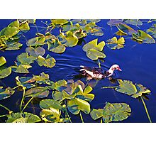 A Daffy Duck Photographic Print